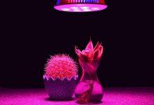 تصویر از لامپ رشد گیاه